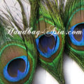 Thai Peacock Feathers
